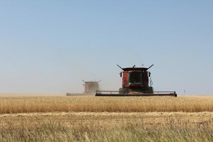 Рекордный урожай зерна за последние 30 лет собрали аграрии Самарской области
