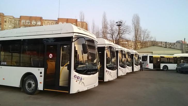 Еще 20 новых автобусов «Волгабас» большого класса прибыли в Воронеж