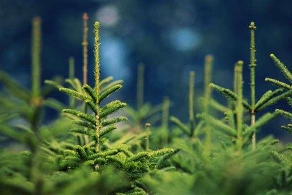 ВИркутской области в2014 году восстановлено более 100000 гектар лесов