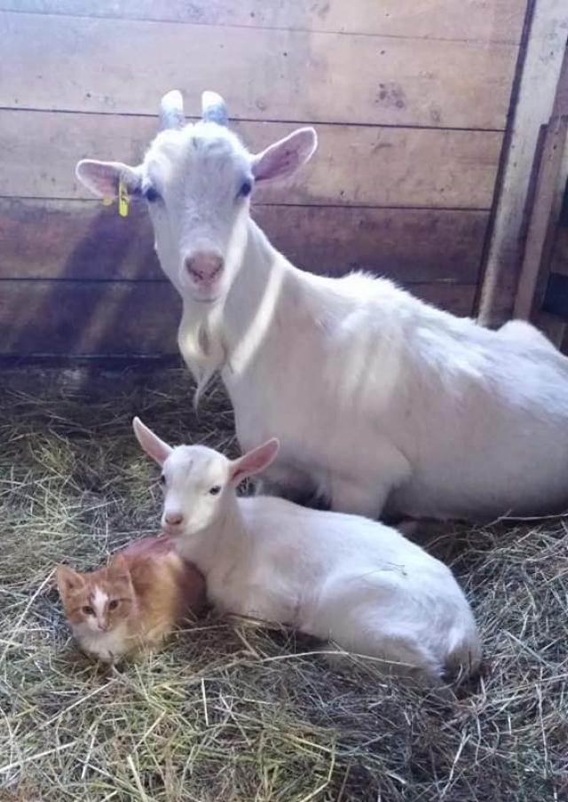 Фермеры о вводимой маркировке молока: «не знаем, что делать – хоть вешайся»
