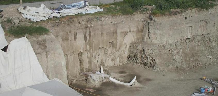 Неудобные факты о всемирном потопе: мамонты в Мексике. Почему вдруг окаменели деревья?