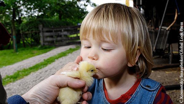 Права цыплят стали важнее прав человека