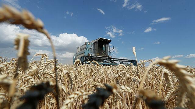 Аграрное производство незалежной сверхдержавы рухнуло на 11,5 процента