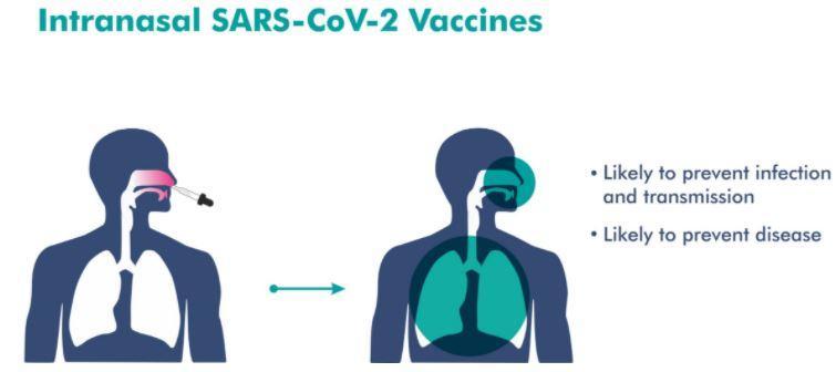 Украинцы будут первыми в мире после обезьян, на ком индусы испытают свою вакцину для бедных