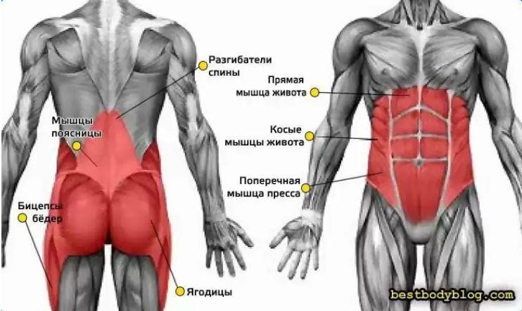 Что такое мышечный корсет и зачем необходимо его укреплять?