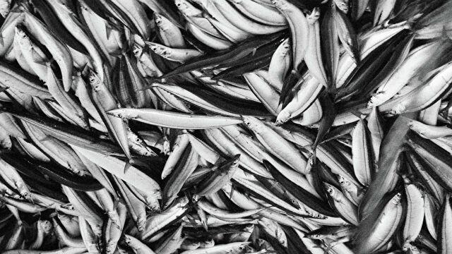 Франция объявляет Британии новую рыбную войну