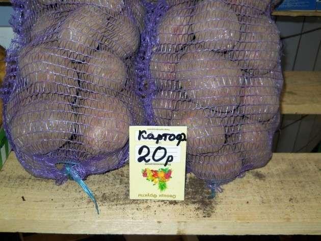 Я евро-картошка: хочу в Россию