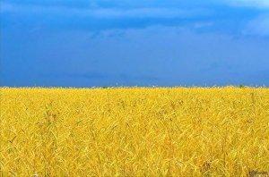 Украина: развязка близка. Блогосфера сегодня