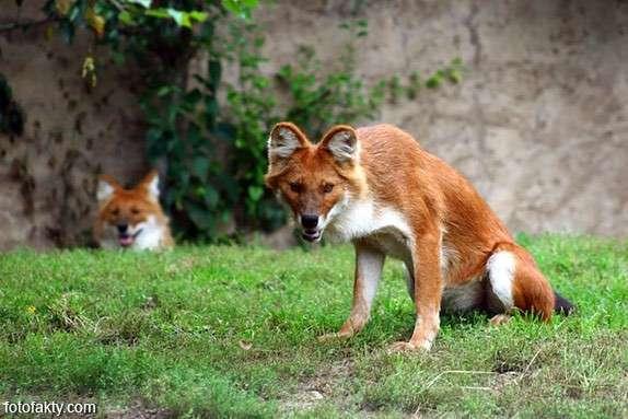 Экзотические животные Фото 1