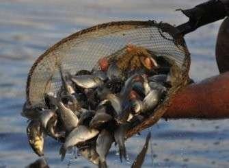 Где тонет рыба из российских морей