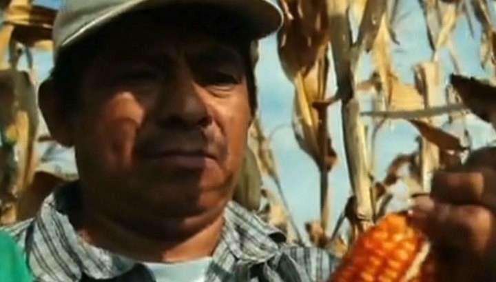Украину хотят превратить в ферму американских ГМО-продуктов