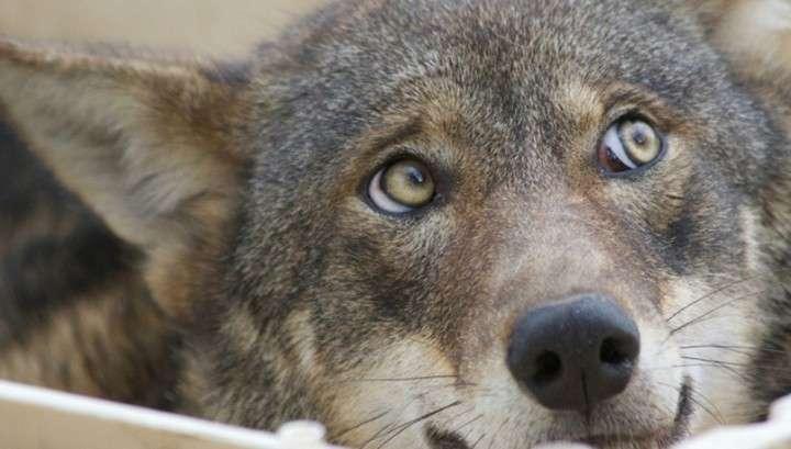 Волк и дикий кабан охраняли тайник с героином в московской промзоне