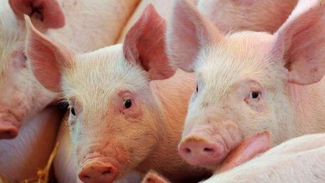 ЕС намерен через суд заставить россиян есть европейскую свинину