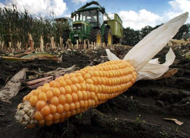 Французский парламент одобрил закон о запрете выращивания ГМ-кукурузы