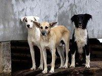 Новая мода в больной Пиндосии: кормить грудью домашних животных