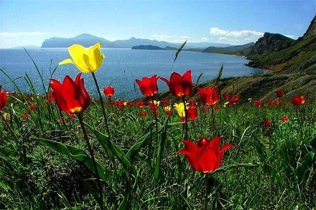 Русская весна пришла в Крым