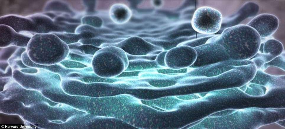 Аппарат Гольджи — мембранная структура эукариотической клетки