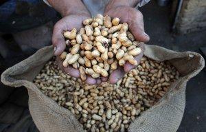 Россельхознадзор вводит запрет на ввоз арахиса из США
