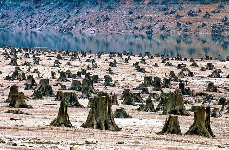 Вырубка лесов  мир, население, последствие, фотография