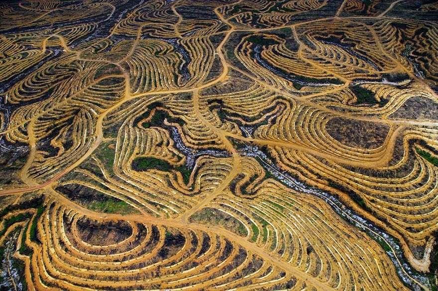Индонезийские леса, превращенные в плантации  мир, население, последствие, фотография