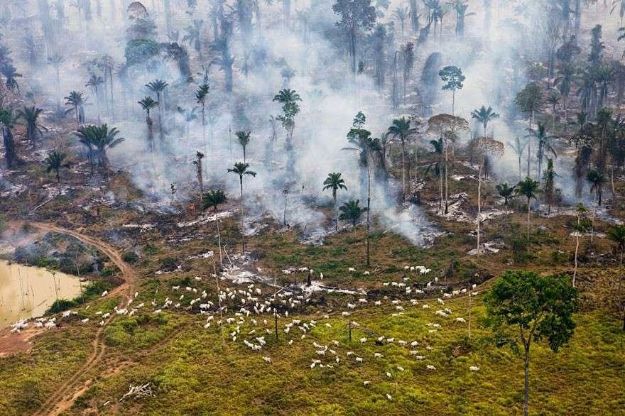 Поджог дождевых лесов Амазонии, Бразилия  мир, население, последствие, фотография