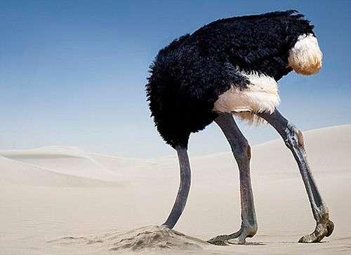 Украина - страус