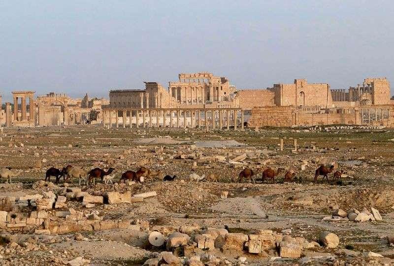 Новый блицкриг джихадистов: пали Рамади и Пальмира
