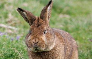 Радиоведущий идиот из Дании убил кролика в прямом эфире