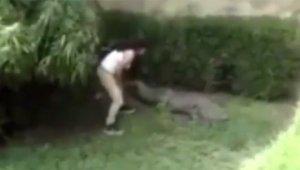 Мексиканка решила погладить крокодила в зоопарке