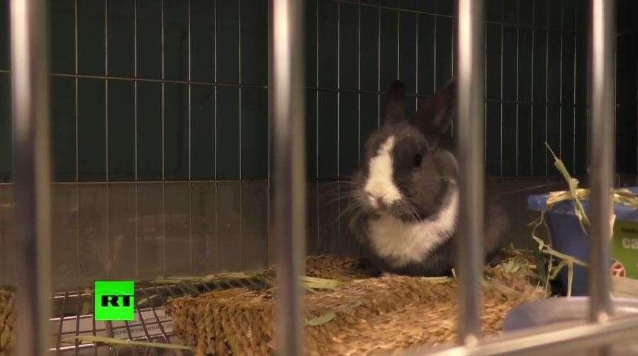 В Австрии учитель убил и расчленил кролика на глазах у детей