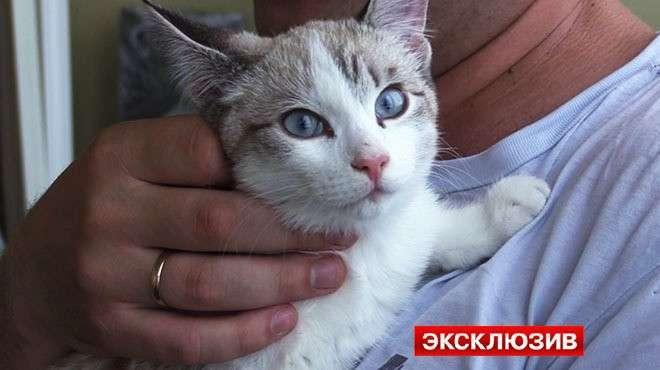 В Новосибирске котёнок выжил, упав с 19-го этажа на автомобиль