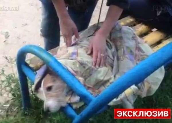 Прохожие спасли девушку и собаку, выброшенных с 7-го этажа