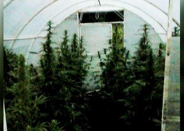 В Пермском крае с помощью беспилотника нашли теплицу с марихуаной