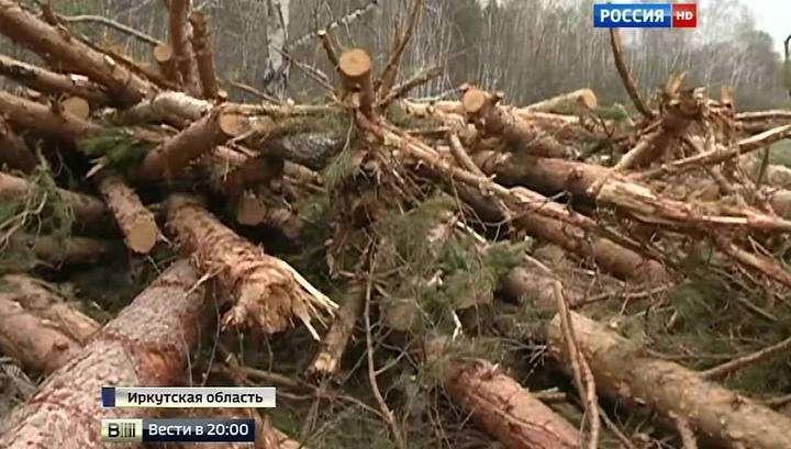 На активистов ОНФ под Иркутском напали чёрные лесорубы