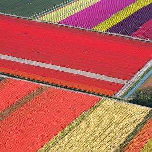 РФ предупредит Европу о возможном запрете ввоза голландских цветов
