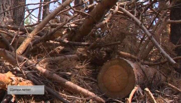 В иркутской области незаконно вырубают леса