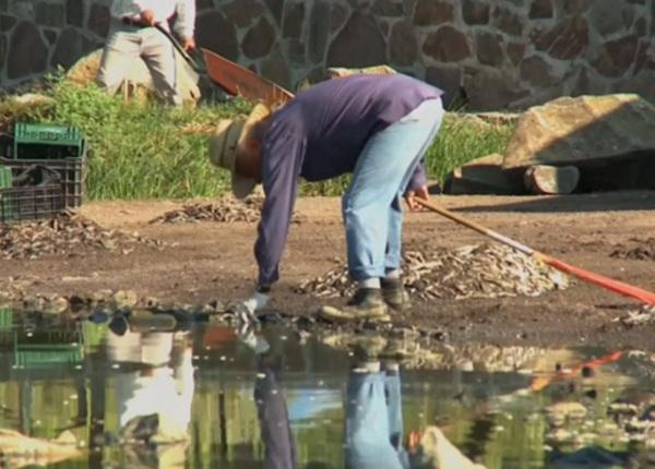 На поверхность озера в Мексике всплыло 40 тонн мёртвой рыбы
