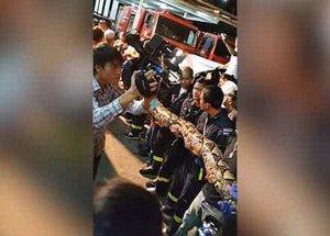 Восьмиметровый питон незаметно подкрался к ресторану в Бангкоке