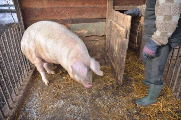 Французские фермеры идут на баррикады из-за политики ЕС и российского эмбарго