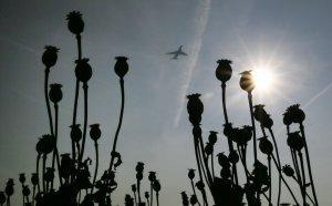 В Мексике растет производство опиума «для нужд» США