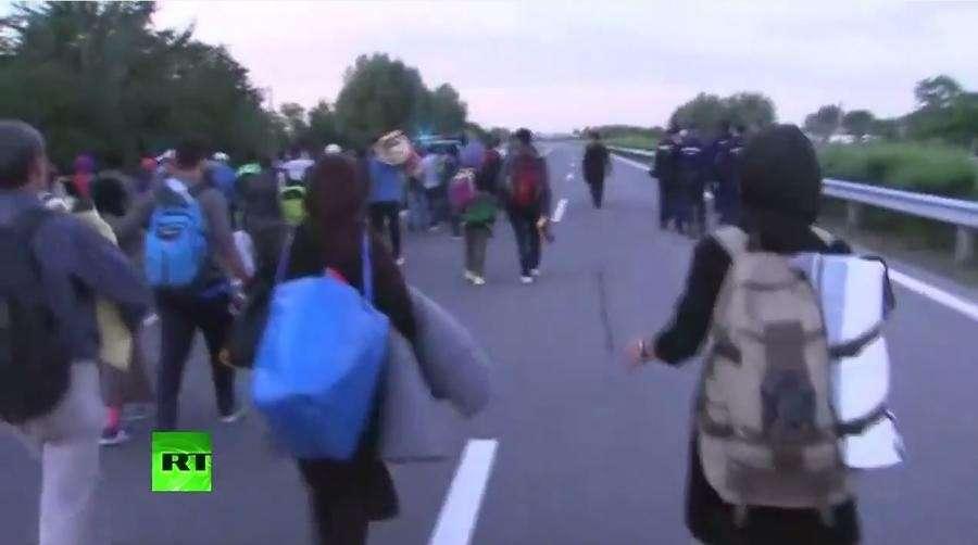 Мигранты пересекли сербско-венгерскую границу и пешком направились в Будапешт