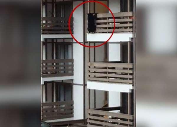 В США медведь в поисках пропитания забрался на балкон третьего этажа