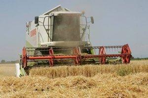 Для продовольственной безопасности страны пора снижать импорт