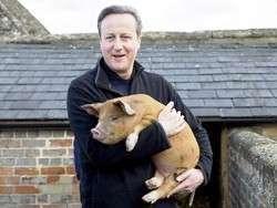 Давид Кэмерон оказался насильником свиней