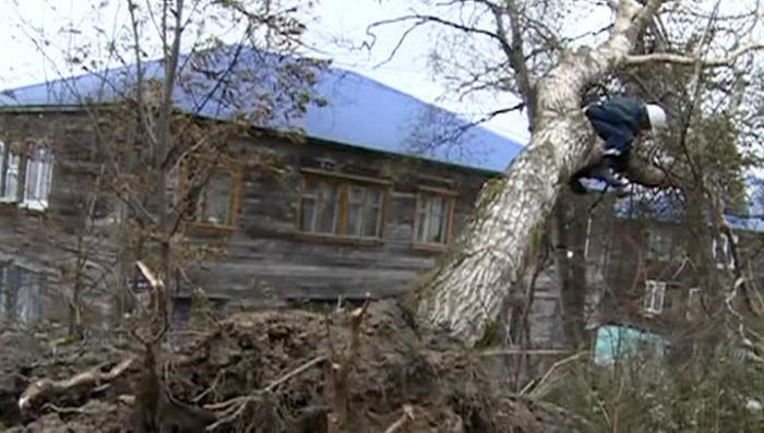 Сильный ураган повалил 400 опор ЛЭП на Сахалине