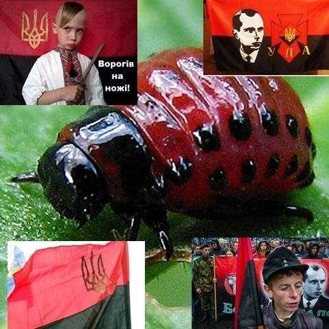 Разведение личинок: Во львовской школе №93 для школьников открыли макет схрона УПА
