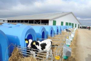 Открыта вторая очередь роботизированного молочного комплекса «Калужская Нива»