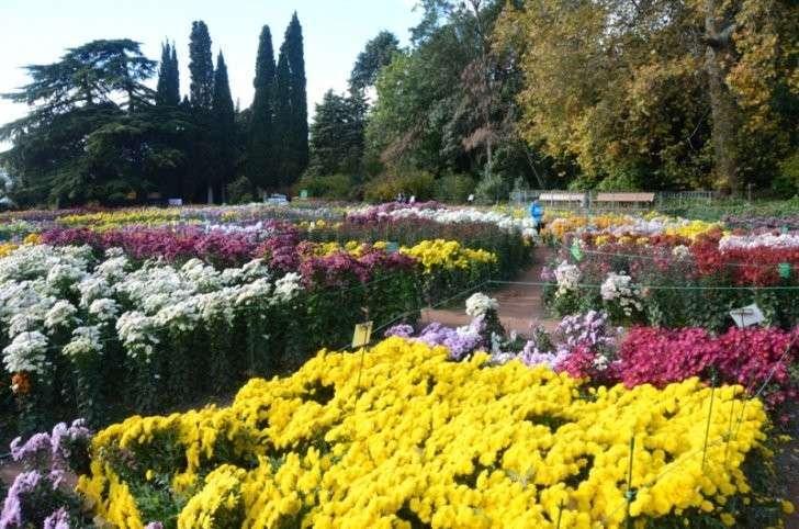 В ноябрьской Тавриде расцвела «Крымская весна»