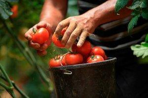 Всесоюзный огород из Астрахани накормит овощами всех