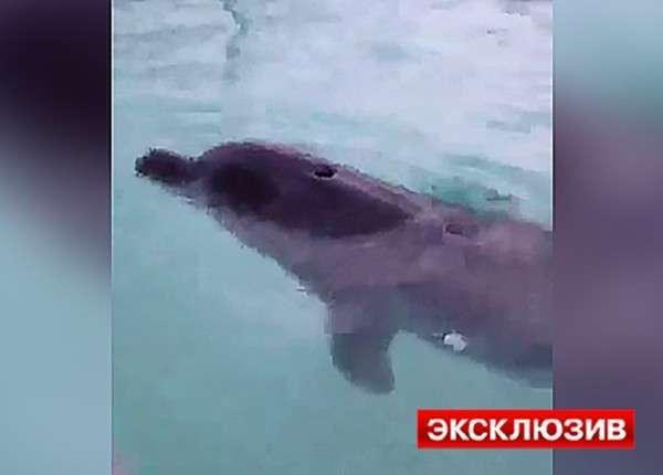 Дельфинов, которых держали в силосной яме на Кубани, привезли в Анапу